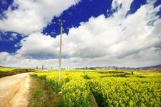 Yellow Rape Field Under The Sky Royalty Free Stock Photo