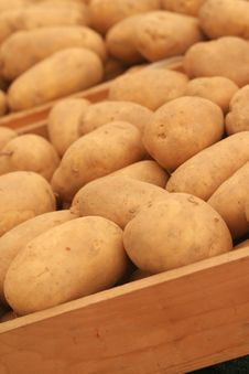 Free Potato Stock Photography - 6673712