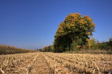 Free Autumn Stock Images - 6674114