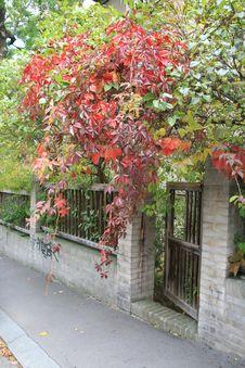 Free Autumn In The City Stock Photos - 6674243
