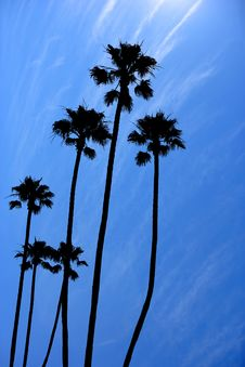 Free Palm Trees Stock Photos - 6674363