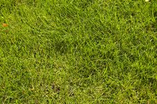 Free Abstract Green Grass Royalty Free Stock Image - 6674946