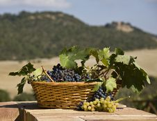 Free Basket Of Red Grapes Stock Photography - 6675362