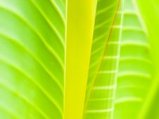 Free Leaves Abstract Stock Images - 6675614