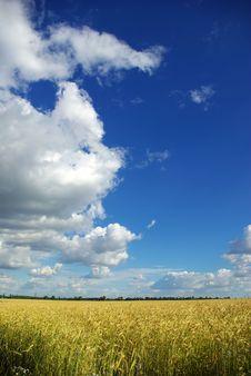 Free Wheat Stock Photography - 6675682
