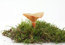 Free Mushroom In Moss Stock Photography - 6675832