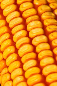 Free Corn Stock Photos - 6675963