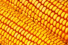 Free Corn Stock Photo - 6675990
