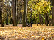 Free Autumn Park In A Sunny Day Stock Photos - 6676013