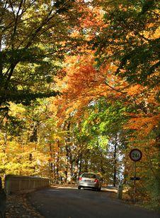 Free Autumn's Road Stock Photos - 6676053