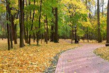 Free An Autumn Track Royalty Free Stock Photos - 6676098