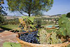 Free Basket Of Grapes Royalty Free Stock Images - 6676199