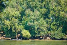 Danube Delta Stock Photo