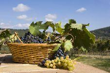Free Basket Of Grapes Stock Photo - 6676280