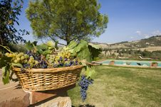Free Basket Of Grapes Royalty Free Stock Photo - 6676305