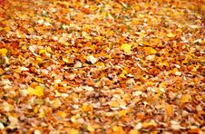 Free Autumn Colours Stock Images - 6676354