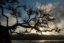 Free Tree Struggling To Survive At Beach In Silhouette Royalty Free Stock Photos - 6678368