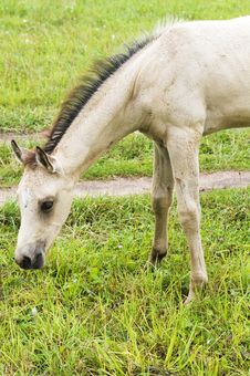 Free White Horse Against Green Grass Royalty Free Stock Images - 6678969