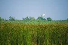 Free Danube Delta Royalty Free Stock Photo - 6679055