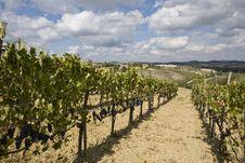 Free Vineyards Royalty Free Stock Image - 6679226