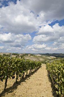 Free Vineyards Stock Photo - 6679330