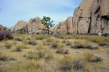 Free Joshua Tree National Park Stock Images - 6679364