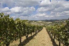Free Vineyards Royalty Free Stock Photo - 6679405