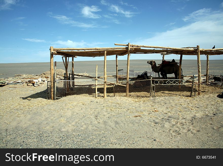 a shed and a camel