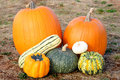 Free Pumpkins And Squash In Field Stock Image - 6682941
