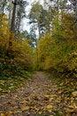 Free Woods Stock Photo - 6685310