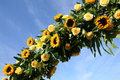 Free Sunflowers Against The Sky Royalty Free Stock Image - 6685966