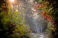 Free Autumn Forest Stock Photo - 6680030