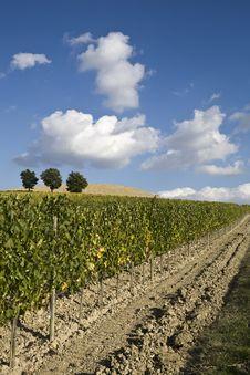 Free Vineyards Royalty Free Stock Image - 6680266
