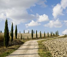 Free Cypress Alley Stock Photography - 6680382