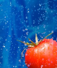 Free Tomato In A Water Splash Stock Photo - 6680460