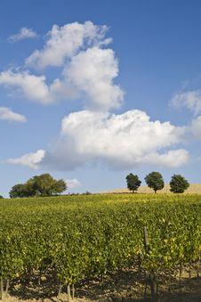 Free Vineyards Stock Image - 6680471