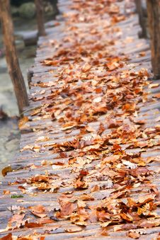Free Autumn Leaves Royalty Free Stock Photos - 6680488