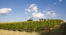 Free Vineyards Stock Photos - 6680513