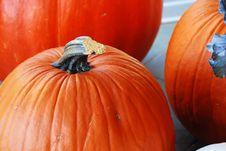 Free Pumpkins Royalty Free Stock Photography - 6680567
