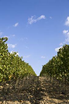 Free Vineyards Stock Photos - 6680613
