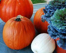 Free Pumpkins Stock Photography - 6680662