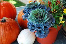Free Pumpkins Royalty Free Stock Photography - 6680667
