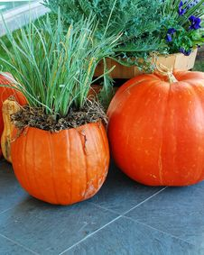 Free Pumpkins Stock Images - 6680674