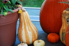 Free Pumpkins Royalty Free Stock Photography - 6680687