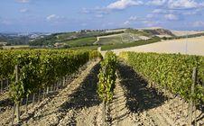 Free Vineyards Stock Image - 6680831