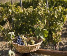 Free Basket Of Grapes Royalty Free Stock Photos - 6680868