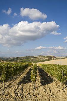 Free Vineyards Stock Photo - 6680880