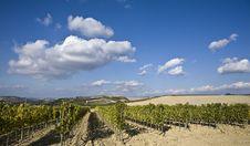 Free Vineyards Stock Photo - 6681020