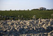 Free Vineyards Stock Photos - 6681143