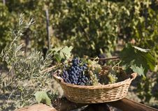 Free Basket Of Grapes Royalty Free Stock Photography - 6681307
